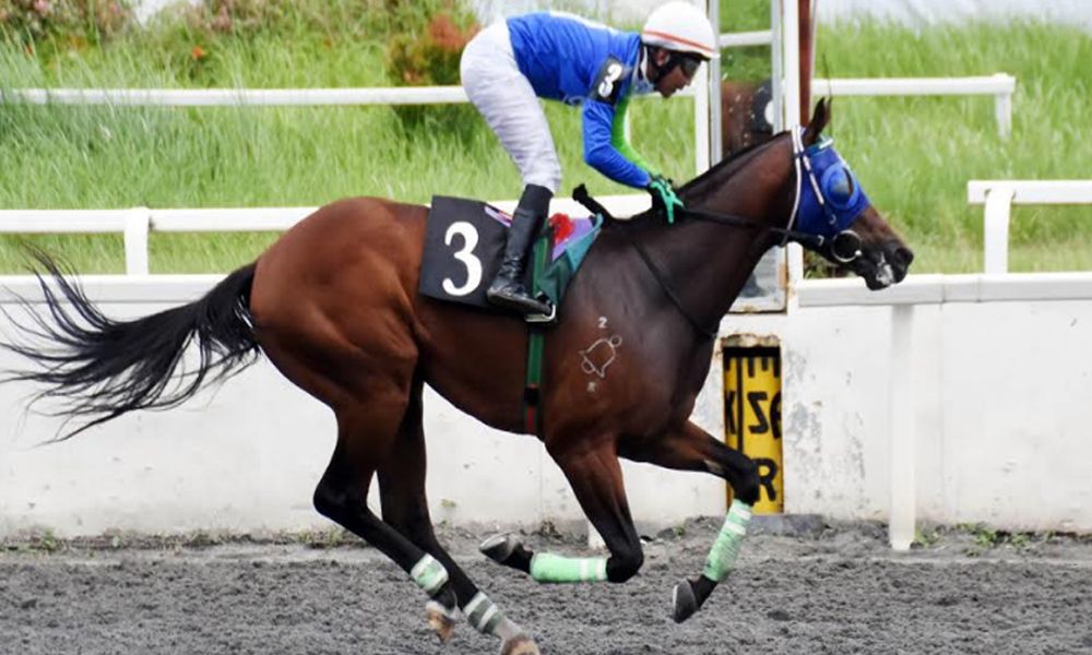 Work Bell - Work Bell tigasin sa Juvenile Colts